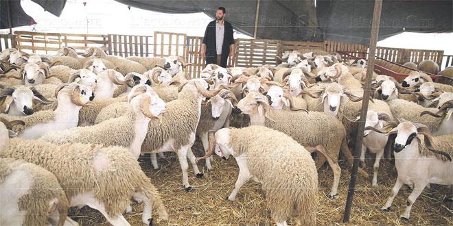 Photo de Aïd Adha 1440: L'offre dépasse la demande de plus de 40%