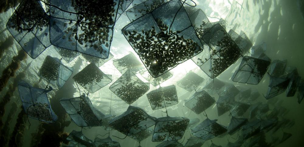 Photo of Métiers d'aquaculture: 2,5 millions de dollars pour l'appui au développement