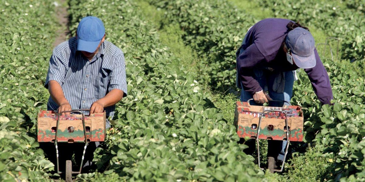 Photo de Agriculture durable : CAM et l'AFD allient leurs efforts