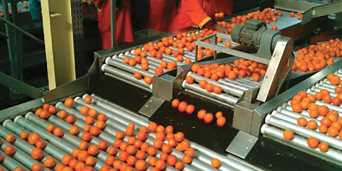 Photo of Indemnité CNSS: Maroc Citrus réclame l'intégration des ouvriers des stations