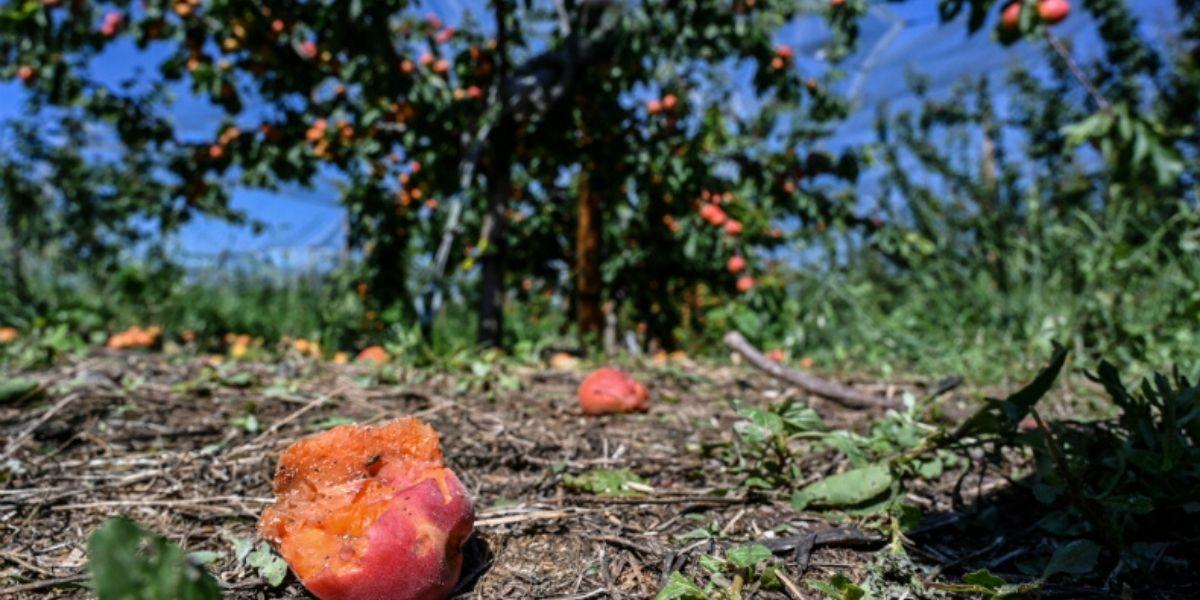 Photo of A Fès-Meknès, la grêle ravage les arbres fruitiers