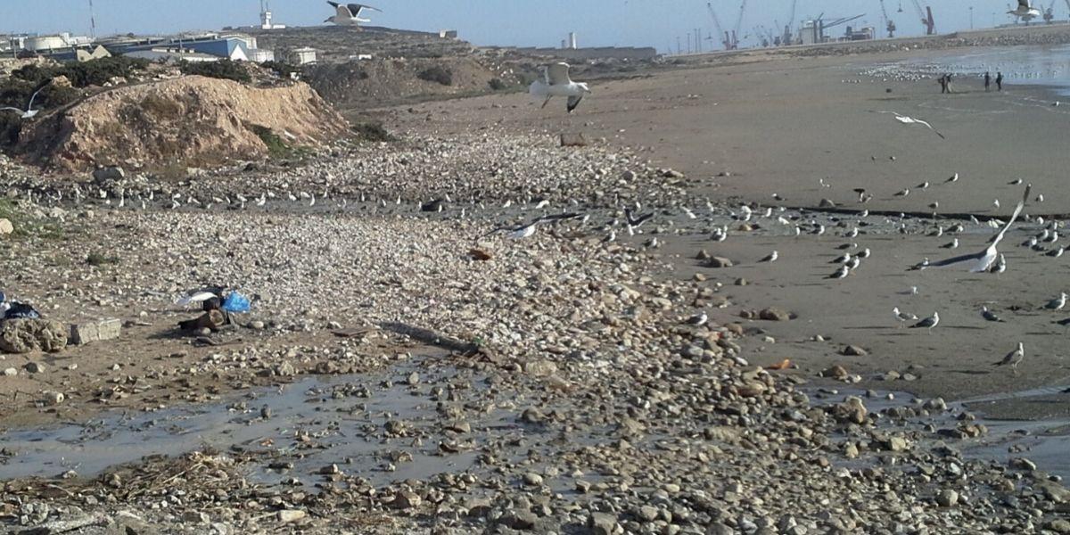 Photo de Zone industrielle d'Anza: la dépollution ajournée