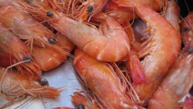Photo of Belgique : le confinement au Maroc a eu un impact…sur les crevettes