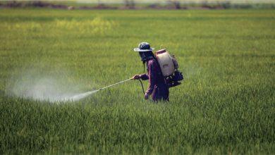 Photo de Pesticides à usage agricole : CropLife désapprouve le réexamen en 2021