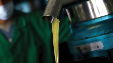 Photo de Béni Mellal-Khénifra : les huileries carburent à plein régime