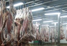 Photo de Casablanca : les abattoirs obtiennent le label halal