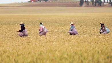 Photo de DOSSIER. Le Maroc rural face à ses nouveaux défis
