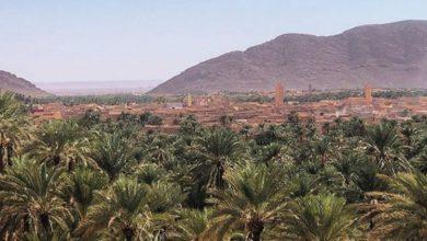 Photo de Terres agricoles au nord de l'oued El Arja : les autorités locales font le point