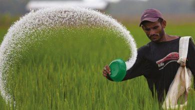 Photo de Campagne agricole : coup de boost aux semences céréalières